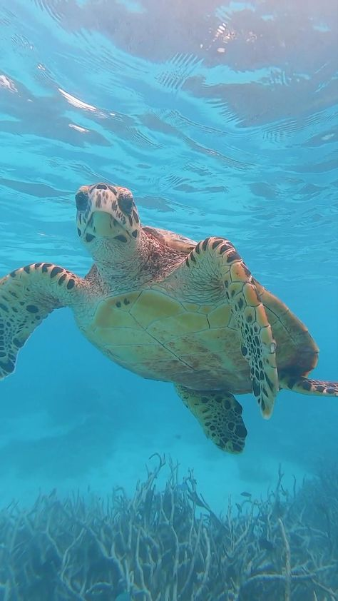 Snorkeling with the most friendly turtle in the Maldives