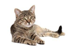 Tabby Cats Pet Hotel Redditch