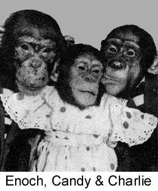 37 best images about Chimps Tea Party on Pinterest | Parks, Tea parties and London