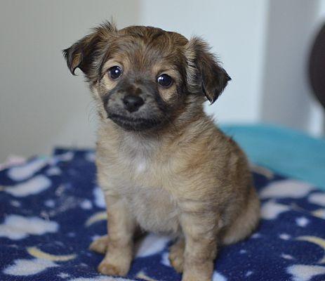 Santa Ana Ca Maltese Meet Antoinette A Dog For Adoption Dog Adoption Pets Pet Adoption
