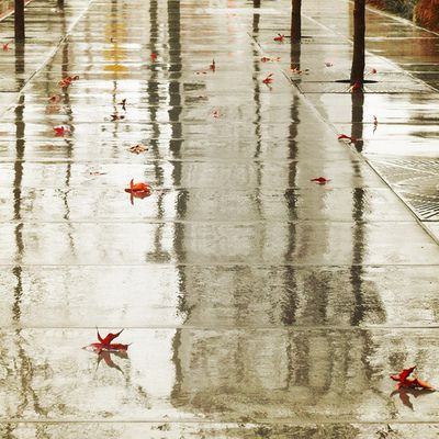 Love, Love, Love the smell of rain and wet concrete!