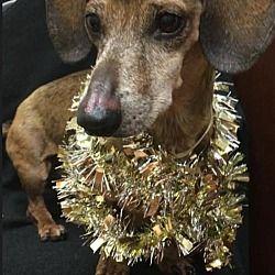 Dog For Adoption In Florida Dog Adoption Pet Adoption