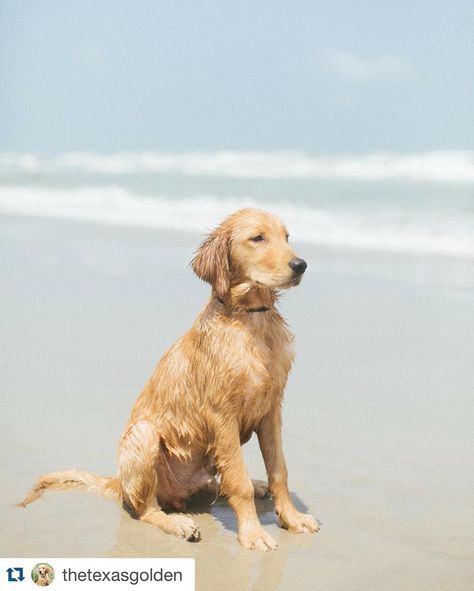 dogsintx Awesome Tucker!! Beaches are...