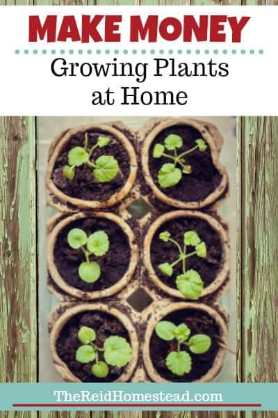 7f437d2c4bae0b14b4cbc93eda55da8f - How Do Gardeners Make Money In Winter