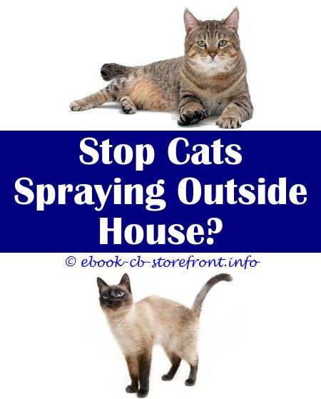 how do you stop a tom cat spraying