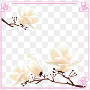 Lotus Magnolia Tree Spring Blossom Lotus Early Spring Floral Border Lotus Magnolia Magnolia Cinnamon Magnolia Png Transparent Clipart Image And Psd File For Floral Border Spring Blossom Magnolia Trees