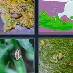 4 Fotos 1 Palabra Caracol Charca O Fango Verde 4fotos 1palabra Com 4 Fotos 1 Palabra Letras Palabras