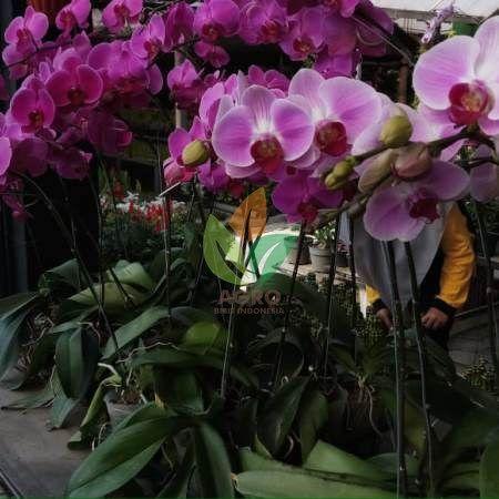 Kebun Anggrek Di Medan