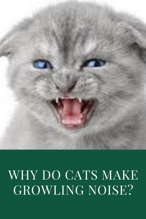 7 Common Cat Noises And What They Mean Cats Cat Noises Cat