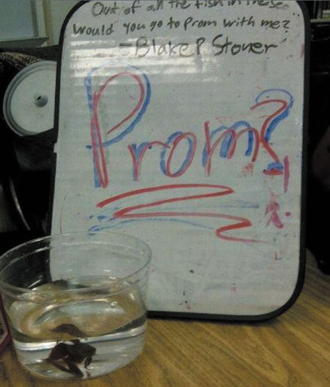 "Blake Stoner got help from a fish named ""Jumanji"" when asking girlfriend Andrea Anderson."