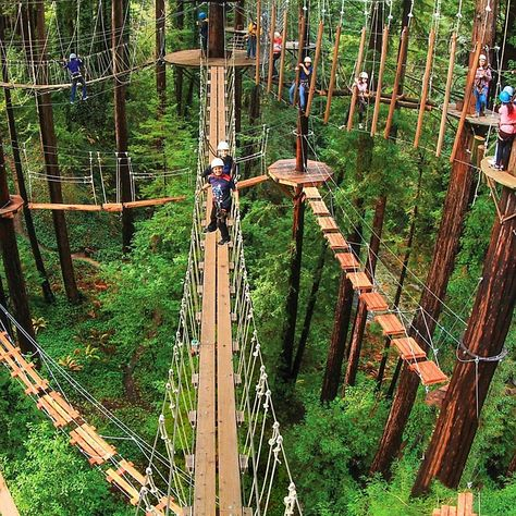 Santa Cruz CA, looks like a demigod training place Oh The Places You'll Go, Places To Travel, Mount Hermon, Magic Places, Tree House Designs, California Travel, Capitola California, Santa Cruz California, Adventure