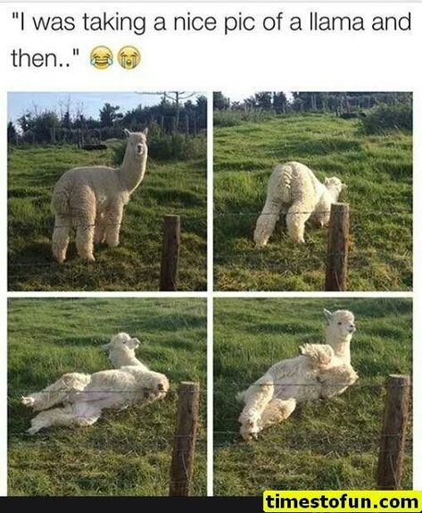 10 memes of the day for Friday, September 2018 - .- 10 Memes des Tages für Freitag, September 2018 – 10 memes of the day for Friday, September 2018 – # for - Funny Animal Memes, Cute Funny Animals, Funny Animal Pictures, Cute Baby Animals, Funny Cute, Animal Humor, Funny Work, Hilarious Pictures, Animal Quotes