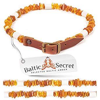 Baltic Secret Bernsteinkette Hund Mit Em Keramik Pipes Effektive Mikroorganismen Bernsteinhalsband Bernsteinkette Fur Hunde Hunde Bernsteinkette