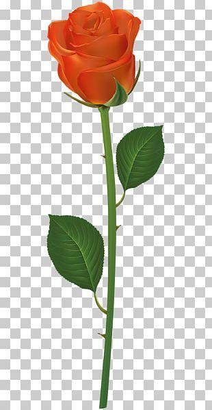 Pin On Flori