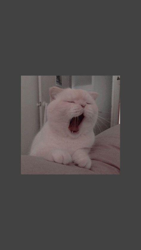 #cat #bored #sleeping #sleepycat #goodnight #cute #easthetic 752101206503692149