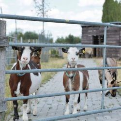 Pin Auf Shop Pets4homes Mustangs