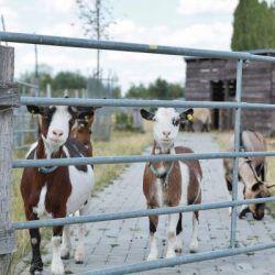 Pin Auf Shop Pets4homes Mustangs