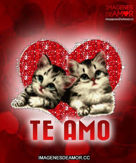 Gatitos dentro de corazón con brillo y frase: Te amo.