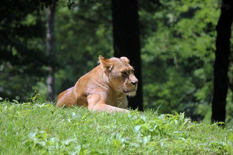 https://flic.kr/p/qPdWLB | Longleat Zoo | July 2013