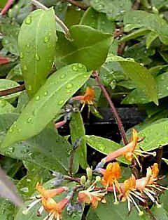 Fassadengrün - gute Pflanzenseite mit Tipps...