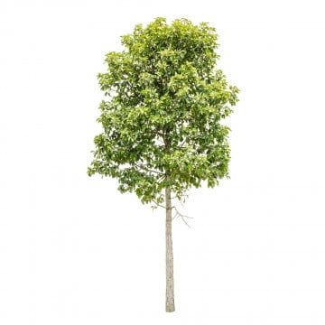 Tree Png Images Download 85000 Tree Png Resources With Transparent Background In 2021 Tree Photoshop Forest Garden Garden Clipart