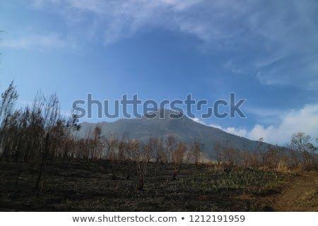 Background Pemandangan Pegunungan Dijamin Enggak Bingung Lagi Mau Liburan Ke Mana Ada Banyak Tempat Wisata Menarik Yang Bi Di 2020 Pemandangan Taman Nasional Liburan