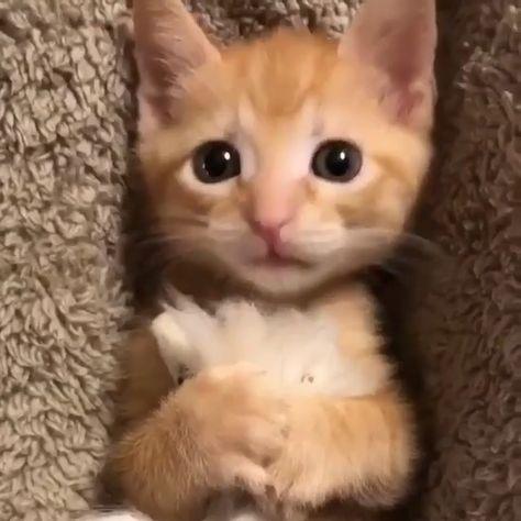cute cats,cute baby cats,funny cats,cute cat,cute cat videos,cutest cats,b
