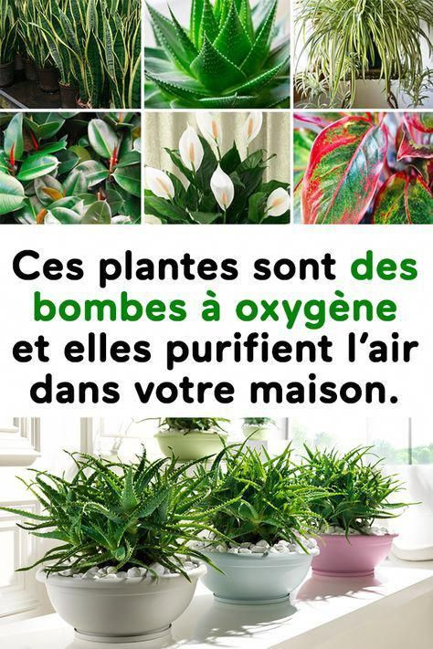 50++ Plante absorbe humidite salle de bain inspirations