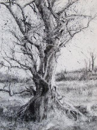50 Tree Charcoal Ideas Landscape Drawings Charcoal Drawing Monochrome Art