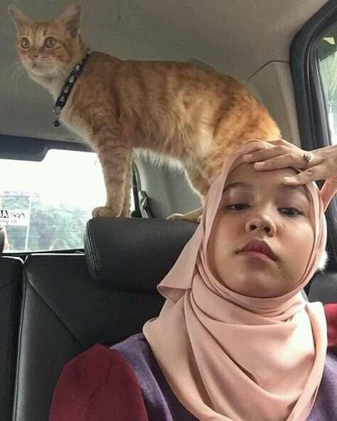 Bercanda Dengan Kucing Oren Cewek Ini Alami Kejadian Menjijikkan Meme Indonesia Memes Dan