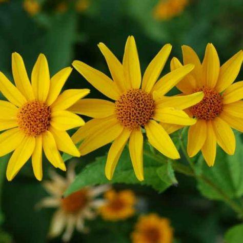 Deko Ideen Garten Mit Herbstblumen Fur Eine Gute Stimmung Im