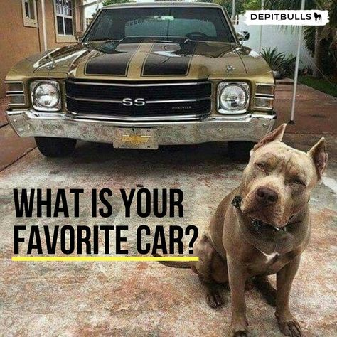 What #is #your #favorite #car #. #Chevrolet #Camaro #SS #. #. #depitbulls.site/pitbull-irish-red-nose-old-family/ #. #. #. #. #. #pitbull #pitbulls #DEPITBULLS #animallovers #animals #pi #dogsofinstagram #puppys #love #lovedogs #a #amor #pitbullrednose #pitbull #pitbullcachorro #cachorro #cachorros #puppylove #pitbullsofinstagram #happy #familia #family #pictures #fotografia #felizdia #americanbully #pitbullbluefawn #felizmiercoles #miercoles #chevrolet #car