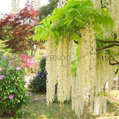 Liberez Le Bonheur Jardins Beaux Jardins Jardins Du Monde