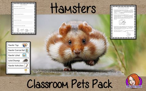 Alternatives to Traditional Class Pets
