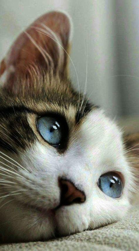 Cute Cats Hd Pictures Cute Cat Drawing Pictures When Cute Animal Katzen Susse Tiere Susse Katze Zeichnung Niedliche Tiere