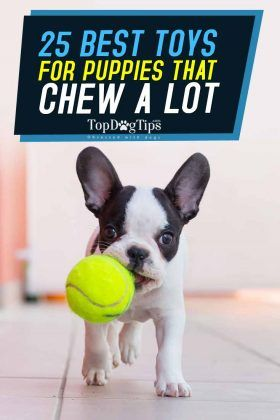Top 25 Best Puppy Toys For Teething And Mental Stimulation Best Puppies Best Dog Toys Best Toys For Puppies
