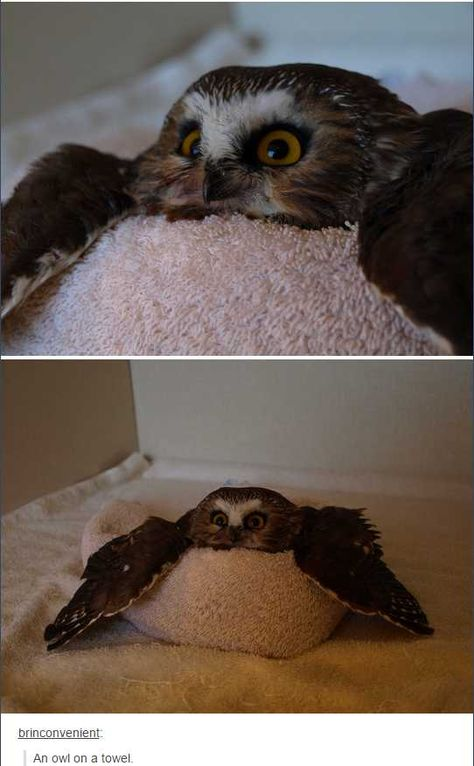 Owls on tumblr - Imgur