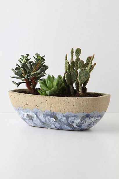 Embellifers Herb Pot