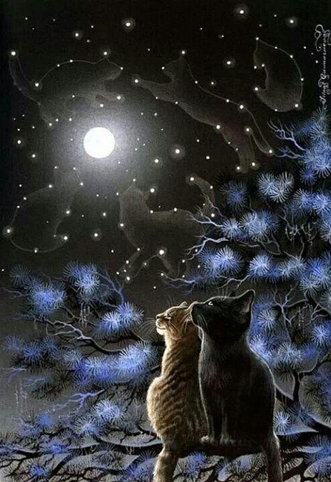 Raggamuffin Cat Print Turquoise Eyes by Irina Garmashova