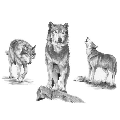 Royal Langnickel Pencil Drawing Kit Howl Mini Sketching Made Easy Wolf