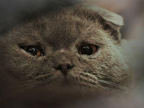 Viele traurige Tiere   Lustige katzenbilder, Katzen