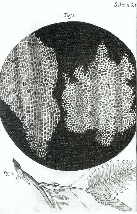 Afbeeldingsresultaat voor robert hooke micrographia sponge