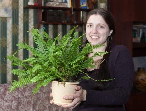 Paprocie Doniczkowe Pielegancja Zima W Mieszkaniu Paprotek Polega Przede Wszystkim Na Zapewnieniu Odpowiedniej Wilgotnosci Powietrza Garden Plants Flora