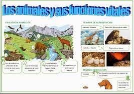 Resultado De Imagen De Funciones Vitales De Los Animales Animales Mamíferos Tarjetas
