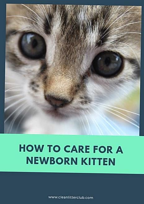 Pin On Kitten Care
