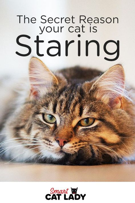 The Secret Reason Your Cat Is Staring At You In 2020 Cat Facts Cats Staring At You
