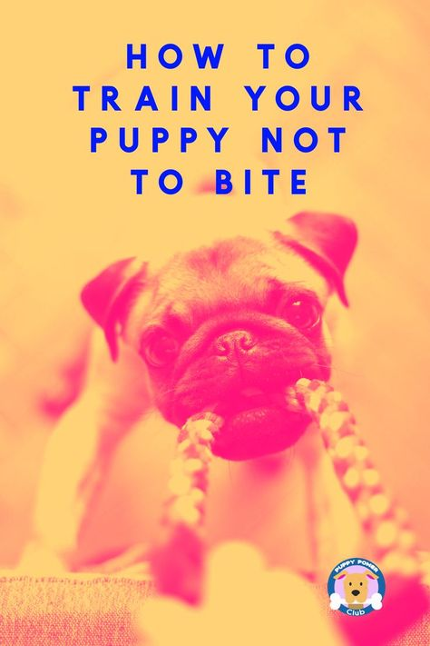 Here S How To Stop Your Puppy From Nipping And Biting Training
