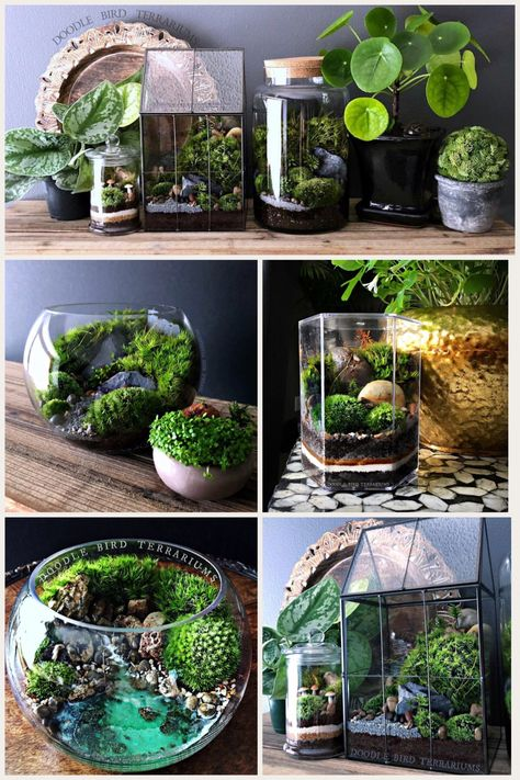 Planted Aquarium, Terrarium Diy, Water Terrarium, Indoor Water Garden, Indoor Plants, Water Garden Plants, Indoor Gardening, Mini Mundo, Decoration Plante