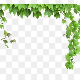 Leaves And Vines Vine Clipart Green Leaves Vine Png And Vector With Transparent Background For Free Download Green Leaves Vines Green Ivy