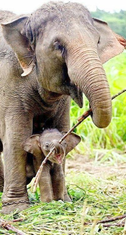 Great Cute Baby Animals Video Download Exceptional Cute Animals Elephant Animals Friends